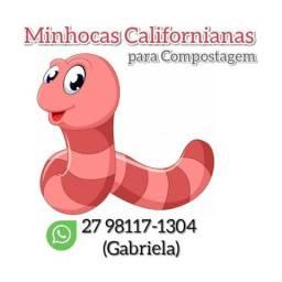 Minhocas Californianas (vermelhas) Vitória-ES