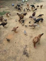 Vendo frango caipira e índio