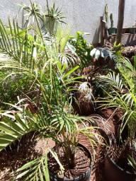 Plantas ornamentais e frutiferas