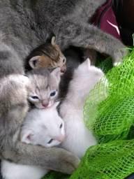 Filhotes para adoção