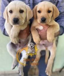 Filhotes de Labrador promoção de dia das mães