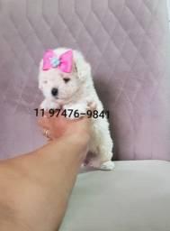 Poodle Micro n. 0 brancos Neve