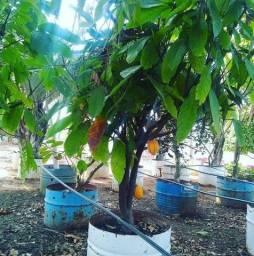Alugo terreno Imbassaí, camping, estufa hidroponia, horto cultivo de plantas.