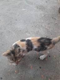 Doação de gatinha urgente