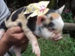 Mini porca