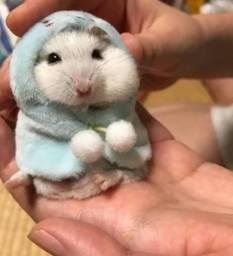 Doando um hamster