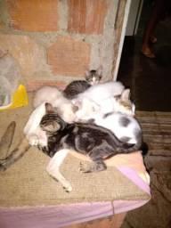 Doação lindos gatinhos