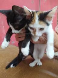 Doação de Gatinhos Fofinhos
