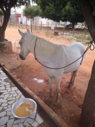 Cavalo de passeio (branco)