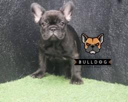 Bulldog Frances Femea Preta Tigrado