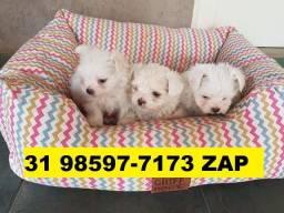 Canil Especializado Cães Filhotes BH Maltês Poodle Bulldog Shihtzu Yorkshire