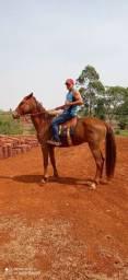 Cavalo e égua