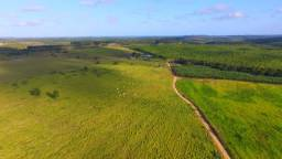 Fazenda de 297 ha em Estância/SE altamente produtiva (eucalipto,mogno,gado,banana,ovelha)