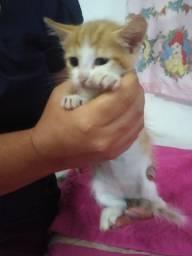 Adoção gatinhas