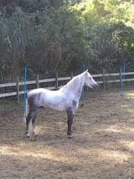 Cavalo de batida topp
