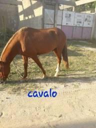 Cavalo...
