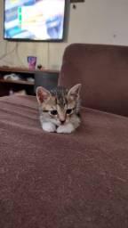 Gatinho macho 2/3 meses