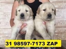 Canil Filhotes Cães Pet em BH Golden Pastor Akita Boxer Rottweiler Labrador