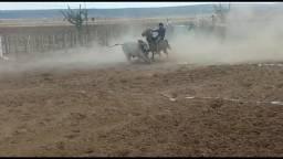 Vendo égua