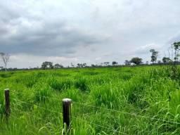 Fazenda em Marabá Beira Rio. 15Mil/Alq