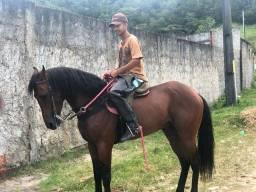Cavalo com registro
