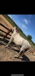 Cavalo Turdilho