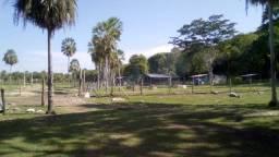 Fazenda a Venda Pantanal MS