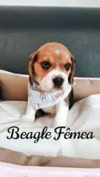Beagle você encontra aqui na Espaço vet