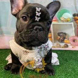 Promoção de dia das mães filhotes de Bulldog Francês fofos