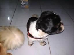 Doa-se cão em Guarapari urgente motivo não tenho tempo de cuidar