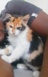 Estou doando essa linda gatinha!