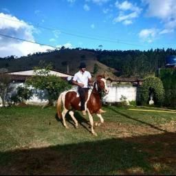 Pampa Castanho MM