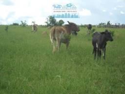 Fazenda após a Vila do manso terra de cultura