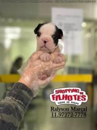 Lindos filhotes de Bulldog Francês, parcelado sem juros