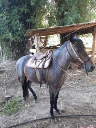 Égua manga larga Marchador