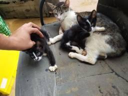 Gatinhos filhotes para doação