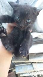 Doação de belos gatinhos!