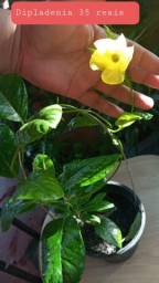 Plantas diversas (por favor leia a descrição)