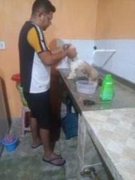 Banho e tosa em domicilio