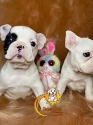 Promoção de dia das mães Adoráveis filhotes de Bulldog Francês