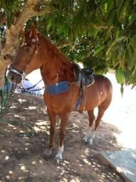 Cavalo de esteira 15 mil