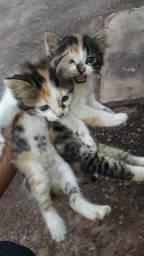 Doa-se dois gatinhos fêmeas