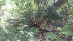 Fazenda de Mata Bruta 3.457 Hectares-Buritirama BA- Ideal para Compensação Ambiental
