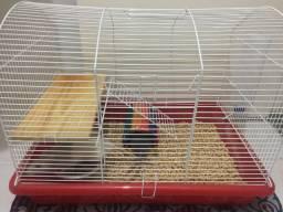 Dois ratos twister