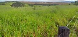 Vdo Fazenda Maravilhosa Região De Paracatu Dupla Aptidão, Vale A Pena Conferir!