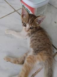9 gatinhos para adoção