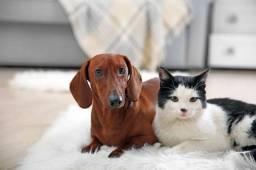 Serviço de Hospedagem - Pet sitter - Dog sitter