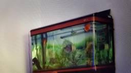 Desmonte de aquário