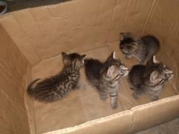 Gatos para doação | Filhotes