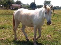 Vendo um cavalo muito manso bao de sela e carroça 2.200